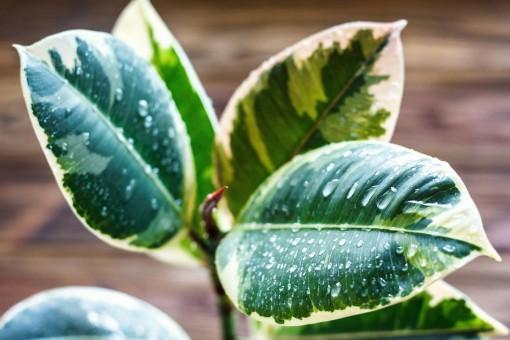 Las ventajas de tener plantas en tus espacios interiores
